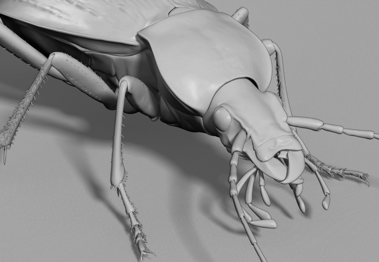 ground beetle.png